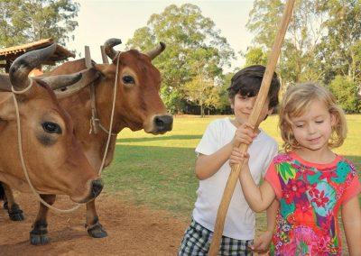 Crianças com as vacas no Hotel Fazenda Mazzaropi