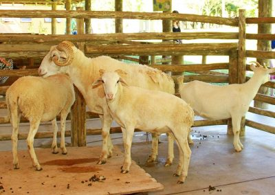 Cabras Hotel Fazenda Mazzaropi