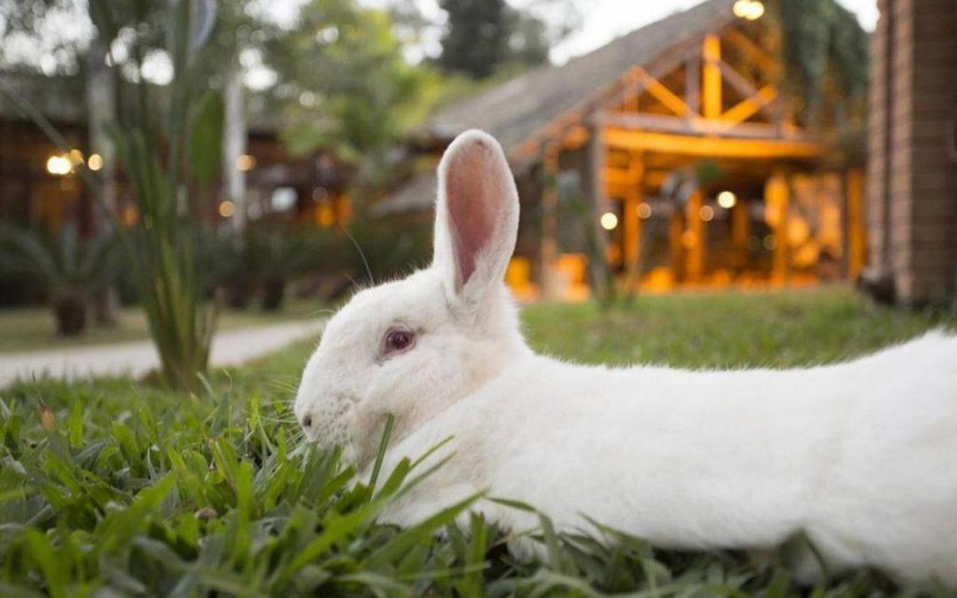 Páscoa com coelhos de verdade e muita diversão