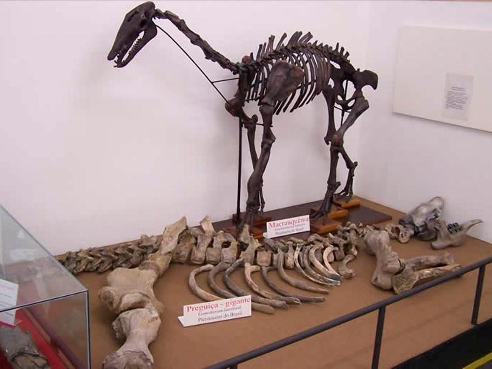 museu historia natural - Localização
